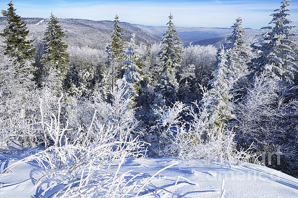 Winter Along The Highland Scenic Highway Print by Thomas R Fletcher
