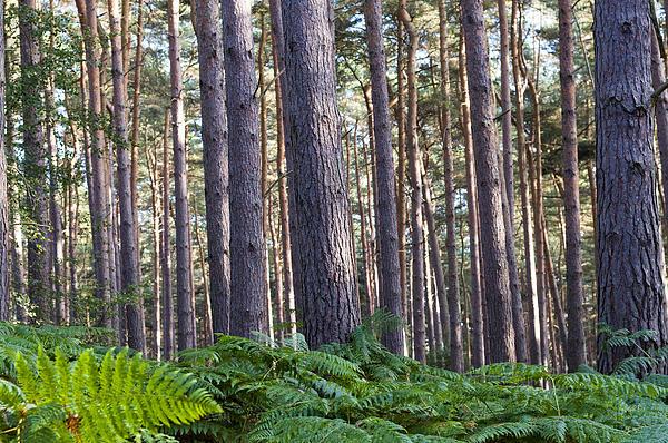Woods Print by David Isaacson