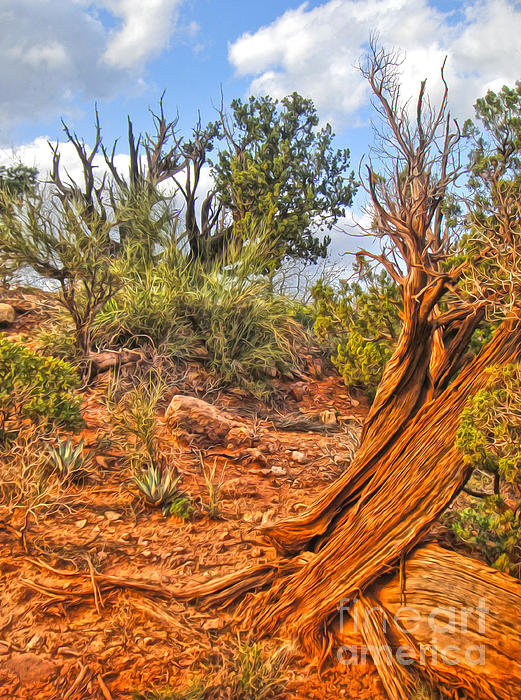 Sedona Arizona Print by Gregory Dyer