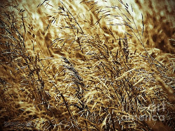 Brome Grass In The Hay Field Print by J McCombie