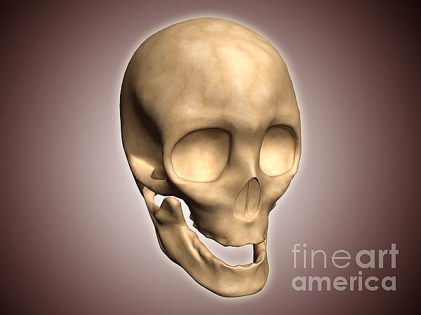 Conceptual Image Of Human Skull Print by Stocktrek Images