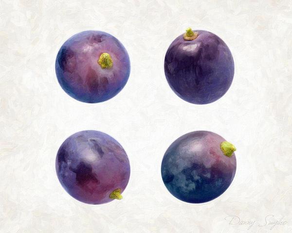 Concord Grapes Print by Danny Smythe