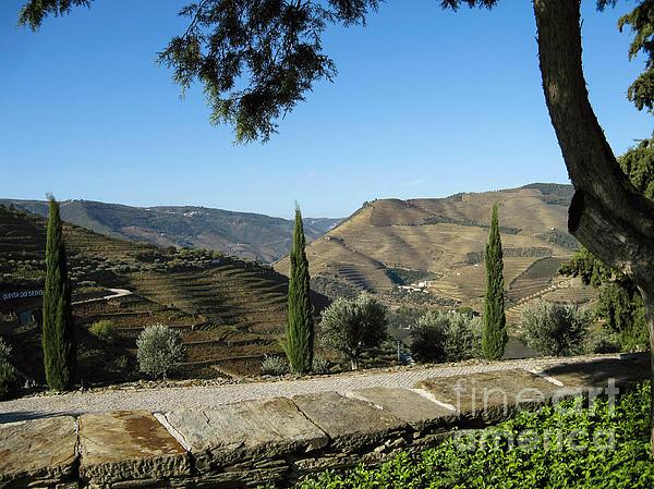 Arlene Carmel - Douro River Valley