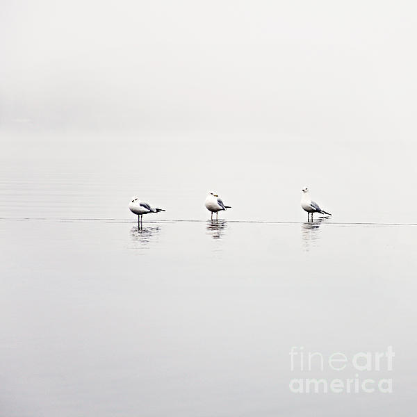 3 Gulls Print by Sylvia Cook