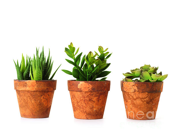 3 Indoor Plants Print by Boon Mee