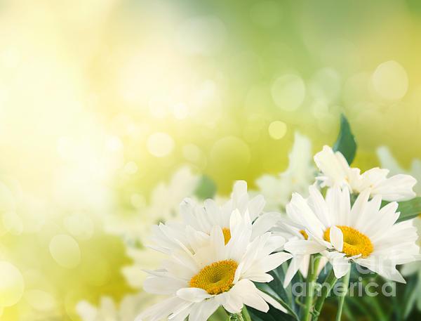 Spring Background Print by Mythja  Photography
