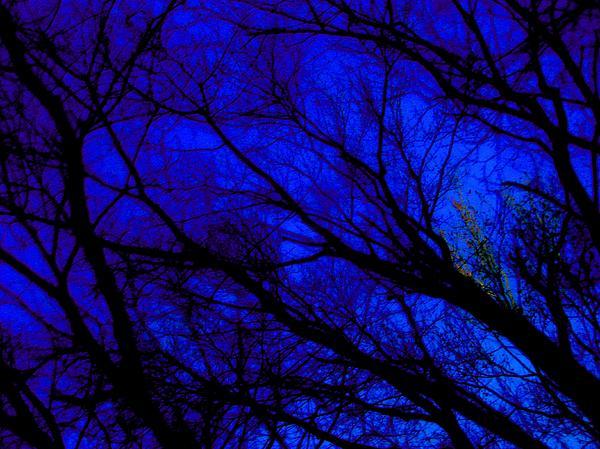 Tree And Sky Print by Allen n Lehman
