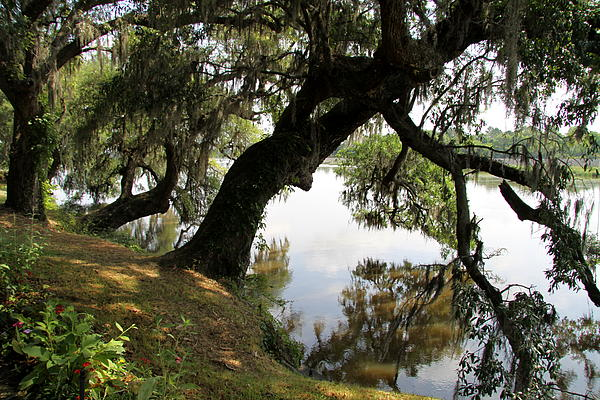 Christiane Schulze Art And Photography - Tree  Reflection