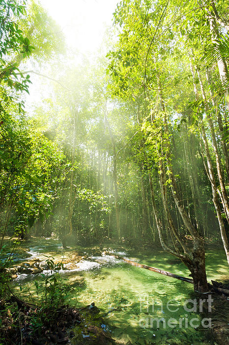 Waterfall In Rainforest Print by Atiketta Sangasaeng