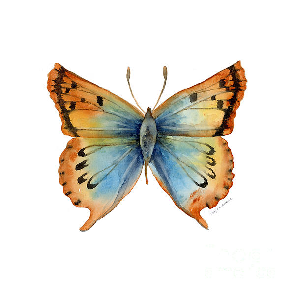 33 Opal Copper Butterfly Print by Amy Kirkpatrick