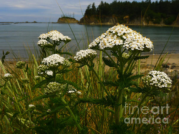 Sunset Bay State Park Print by Gail Peters