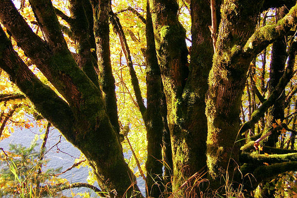 Autumn 3 Print by J D Owen