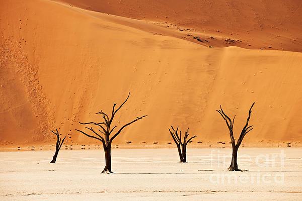 Dead Vlei In Namib Desert Print by Juergen Ritterbach
