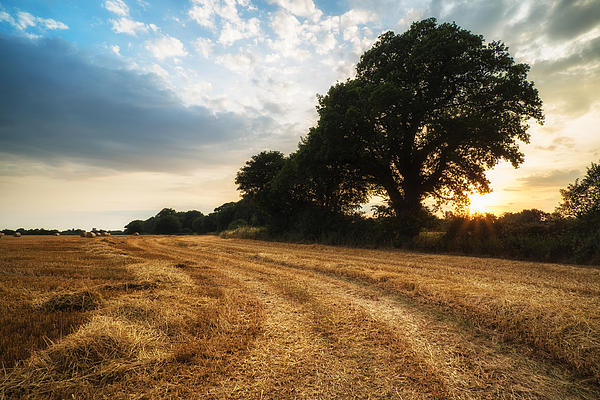 Stunning Summer Landscape Of Hay Bales In Field At Sunset Print by Matthew Gibson
