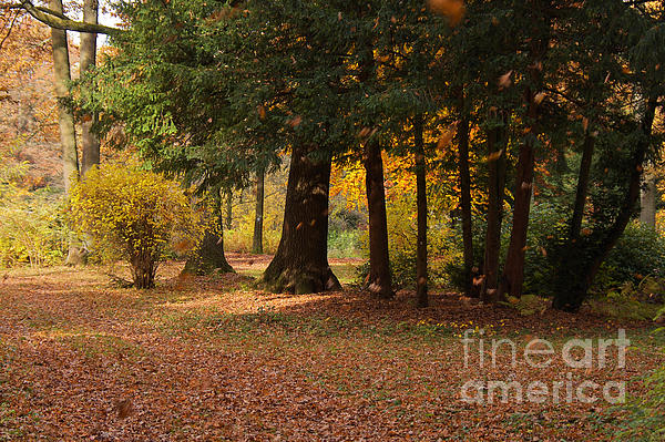 Autumn Print by Angela Doelling AD DESIGN Photo and PhotoArt