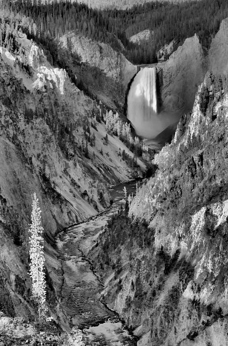 Lower Yellowstone Falls Print by Stephen  Vecchiotti
