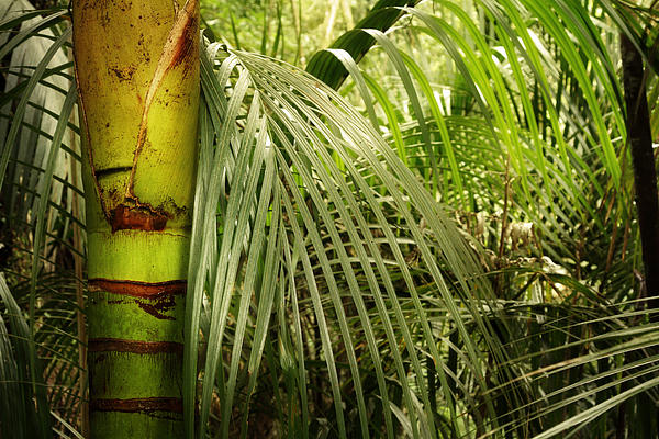 Jungle Print by Les Cunliffe
