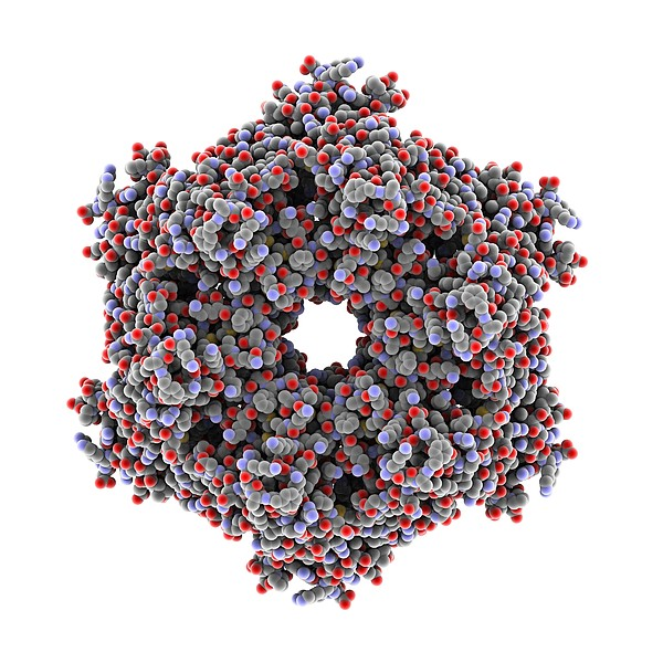 Atpase Molecule Print by Science Photo Library
