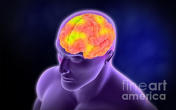 Conceptual Image Of Human Brain Print by Stocktrek Images
