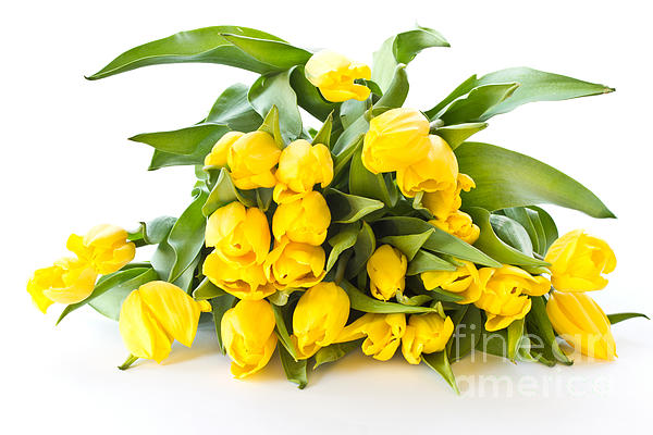 A Beautiful Yellow Tulips Print by Boon Mee