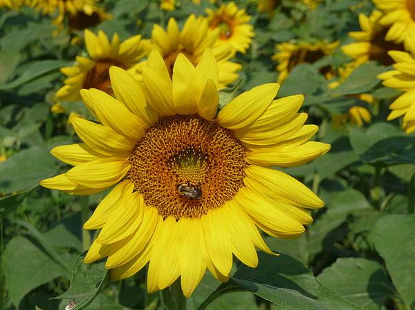 Viktoria K Majestic - A Beesy Day