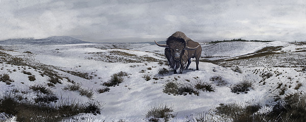 A Bison Latifrons In A Winter Landscape Print by Roman Garcia Mora