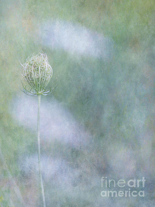 Jackie Schuknecht - A Cloudy Day in the Garden