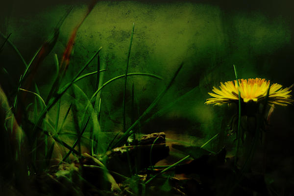 A Darkness Befalls The Dandelion Print by Rebecca Sherman