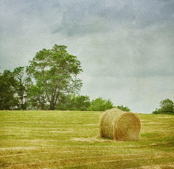 A Day At The Farm Print by Kim Hojnacki