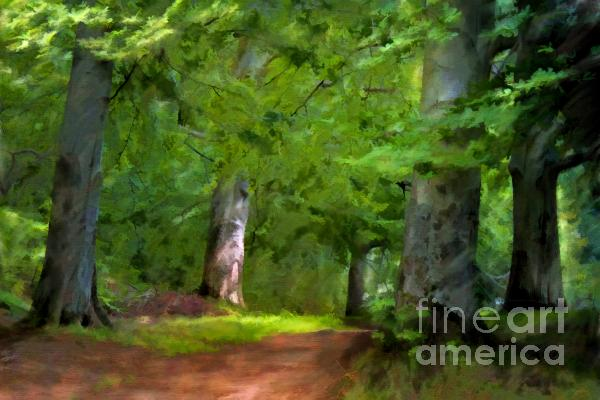 A Day In The Forest Print by Lutz Baar