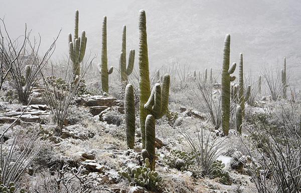 A Desert Blizzard  Print by Saija  Lehtonen
