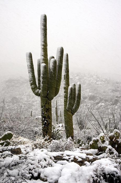 A Desert Southwest Snow Day  Print by Saija  Lehtonen
