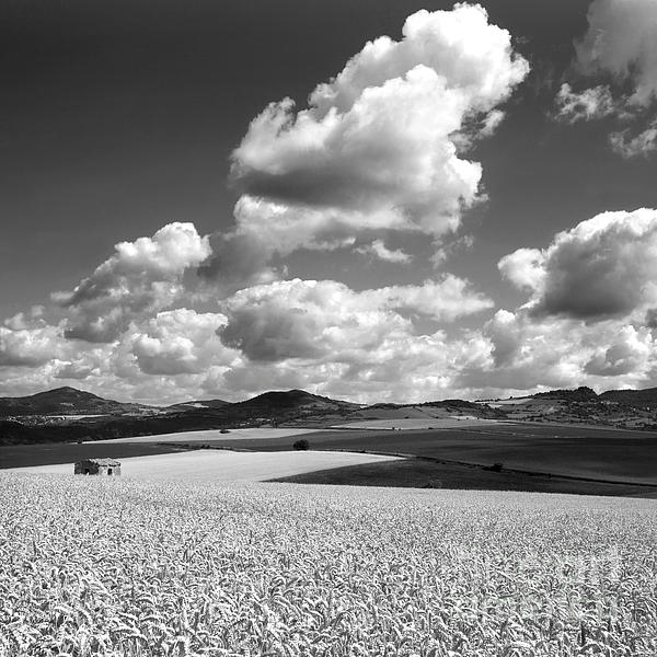A Field Of Wheat. Limagne. Auvergne. France Print by Bernard Jaubert