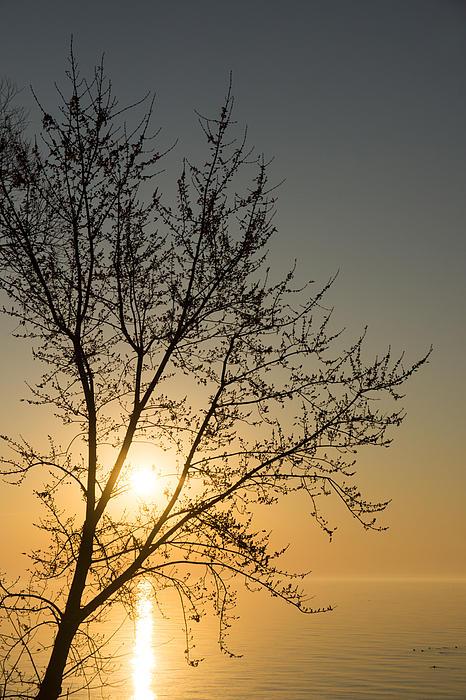 A Filigree Of Branches Framing The Sunrise Print by Georgia Mizuleva