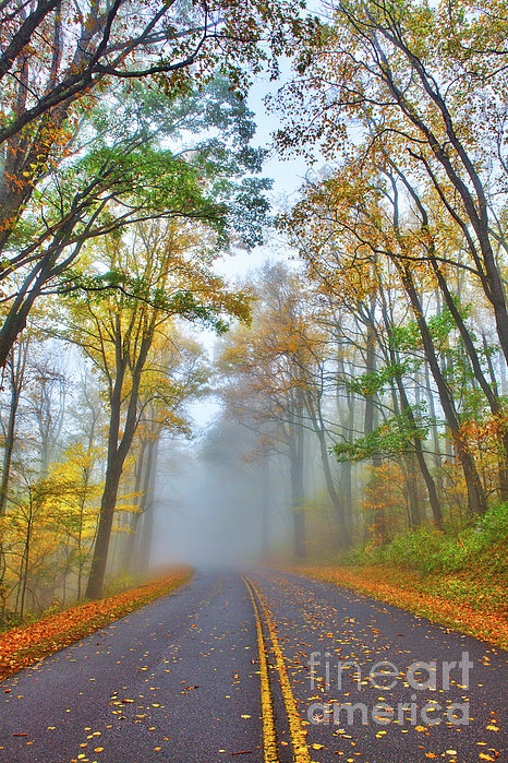 Dan Carmichael - A Foggy Drive Into Autumn - Blue Ridge Parkway