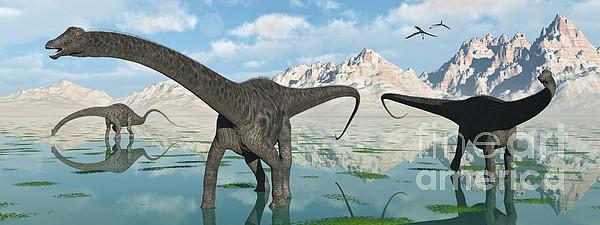 A Group Of Diplodocus Dinosaurs Grazing Print by Mark Stevenson