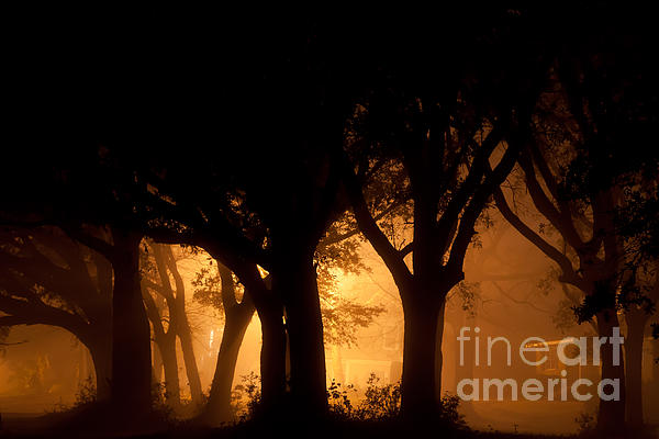 A Grove Of Trees Surrounded By Fog And Golden Light Print by Jo Ann Tomaselli