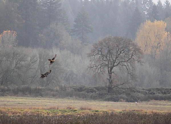 A Hawk's Paradise Print by Angie Vogel