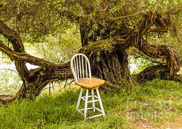 Kate Brown - A Little Solitude