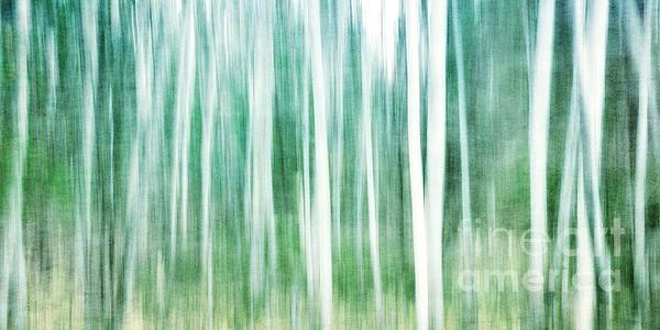 A Matter Of Blues Print by Priska Wettstein