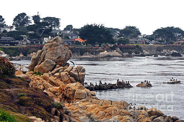 A Misty Day At Pacific Grove Print by Susan Wiedmann
