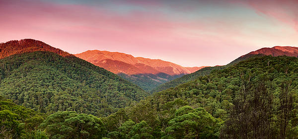 A Natural Highlight Print by Mark Lucey