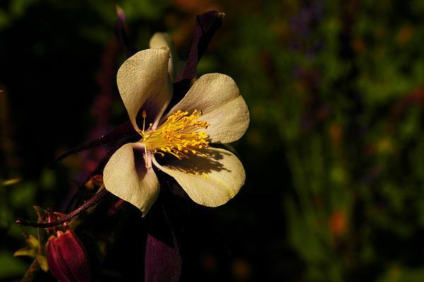 A Pretty Flower In The Sun Print by Jeff  Swan