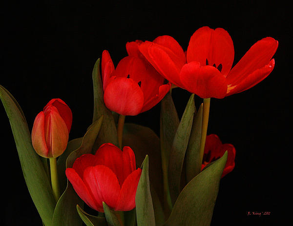 Roena King - A Red Tulip Day