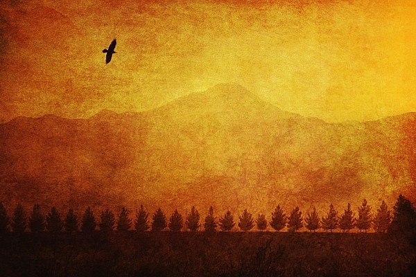A Row Of Trees And A Raven Silhouetted Print by Roberta Murray