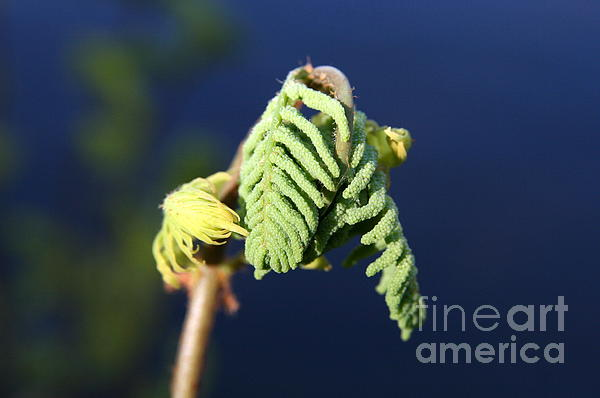 Neal  Eslinger - A Spring Beginning