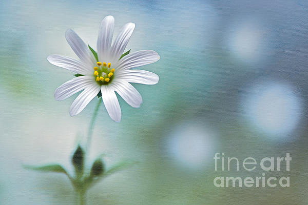A Touch Of White Print by Jacky Parker