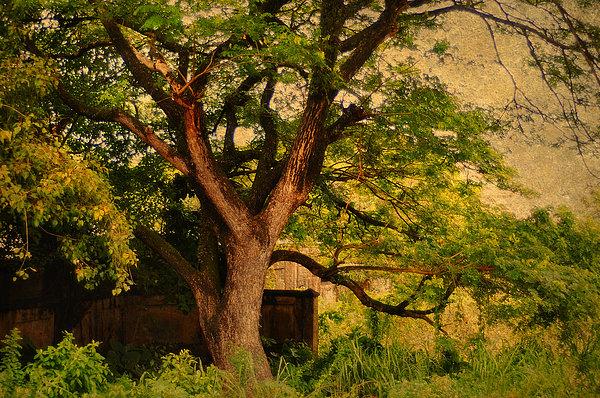 A Tree Print by Jenny Rainbow