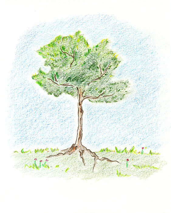 A Young Tree Print by Keiko Katsuta