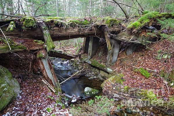 Abandoned Boston And Maine Railroad Timber Bridge - New Hampshire Usa Print by Erin Paul Donovan